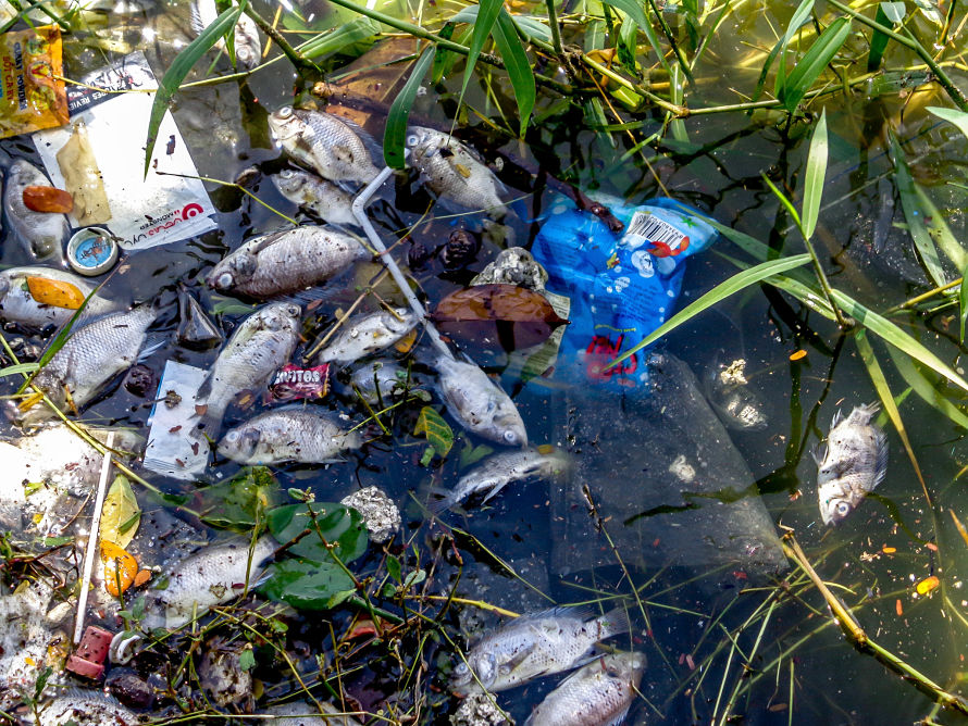 deadly chemicals, Vietnam