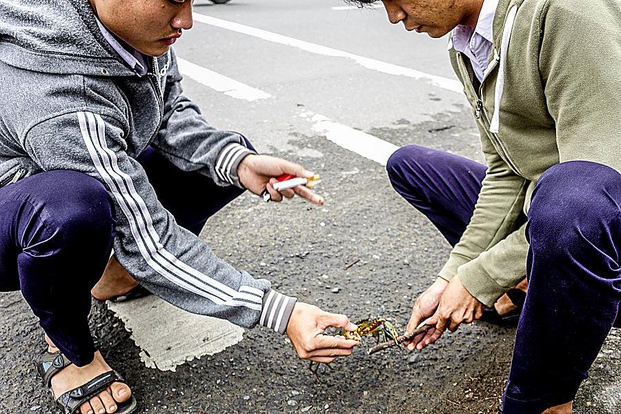 stories of hoi an, crab, vietnam