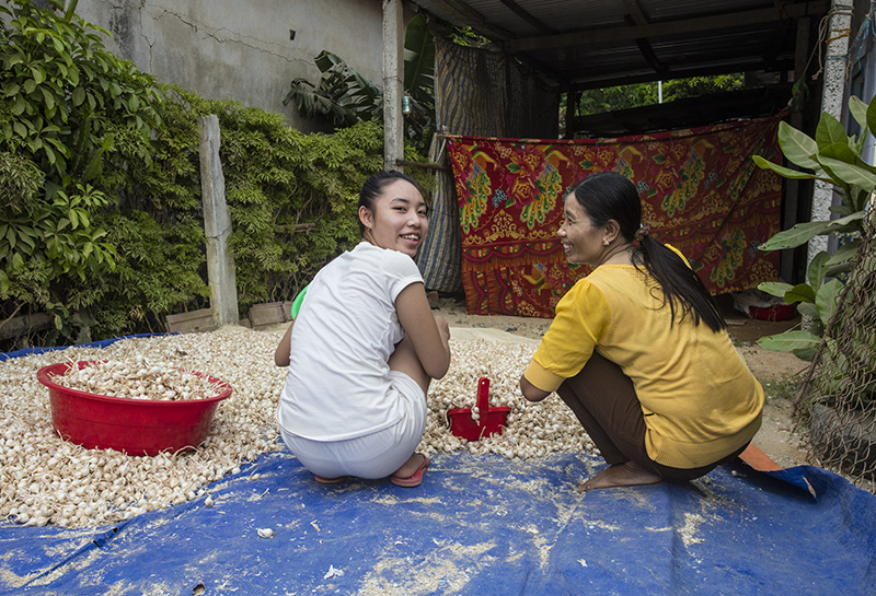 Ly Son, Vietnam. Sorting garlic.