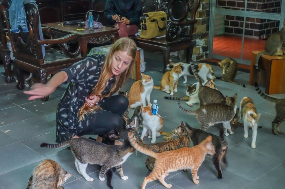 Pounce Cat Cafe Hours