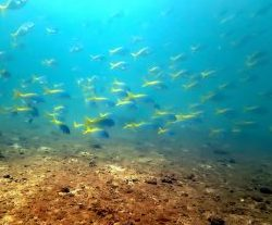 Cham island, under the water, fishes