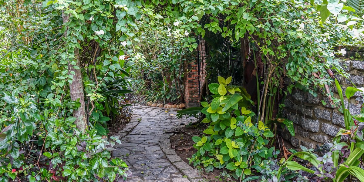 korea-vs-vietnam-garden