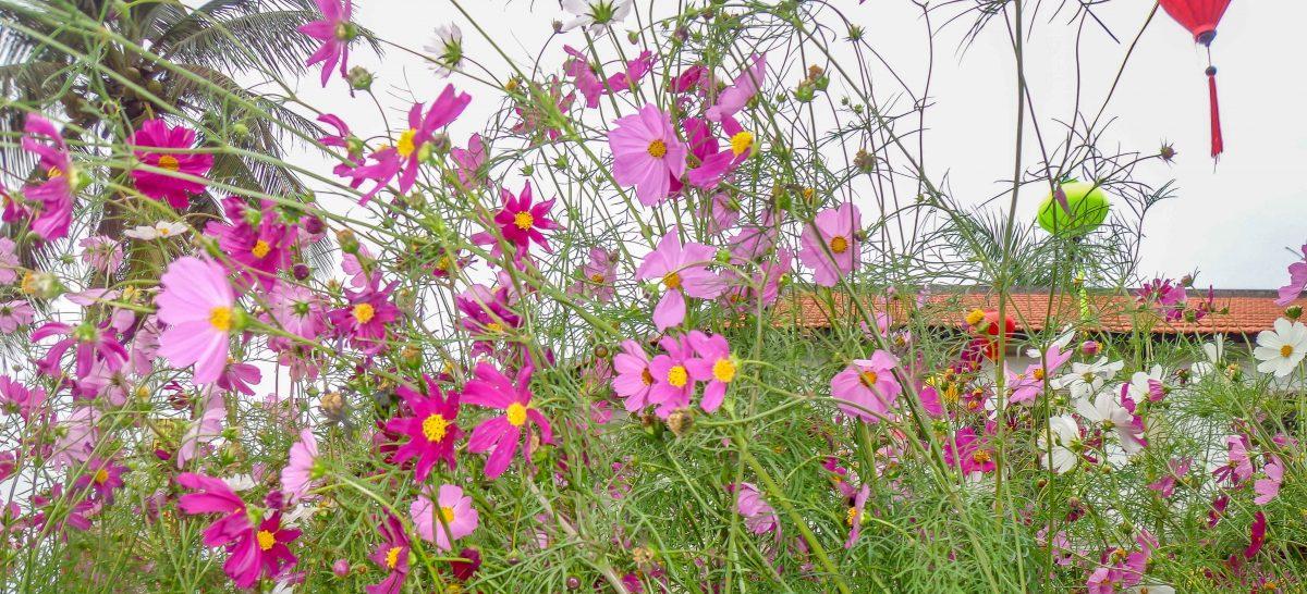 Tet Flowers 2