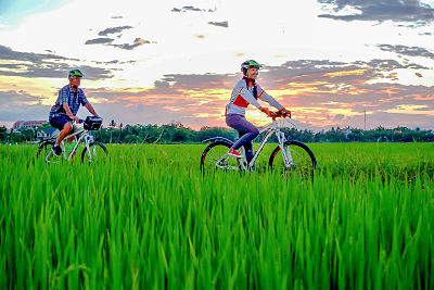Gasshopper Adventures Promotion. Rice Fields