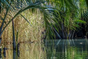 Hoi An Kayak Tours. Channel through the Nipa Palms.