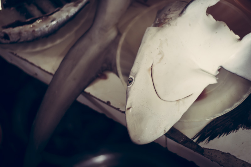 Tiger Market Shark