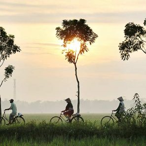 Cycling-Rice-Paddies