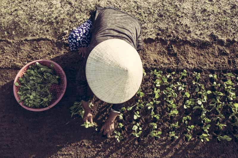 Vegetable Village Planting