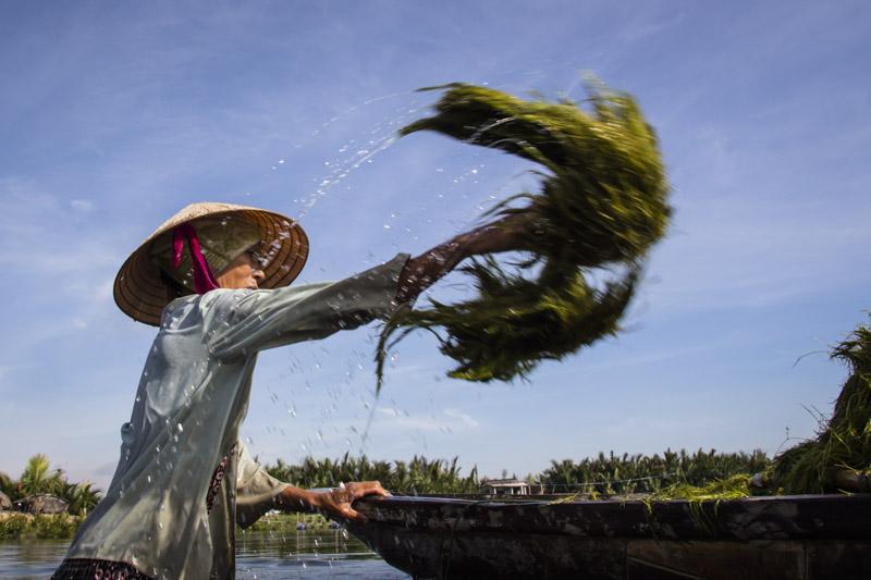 Vegetable Village Seaweeder