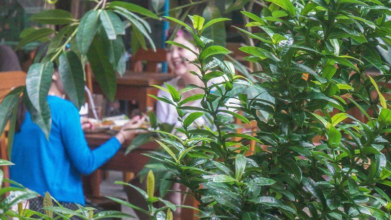 Orivy. Restaurant Review. Garden diners