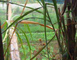 Merlin's Homeschool Garden organic garden setting