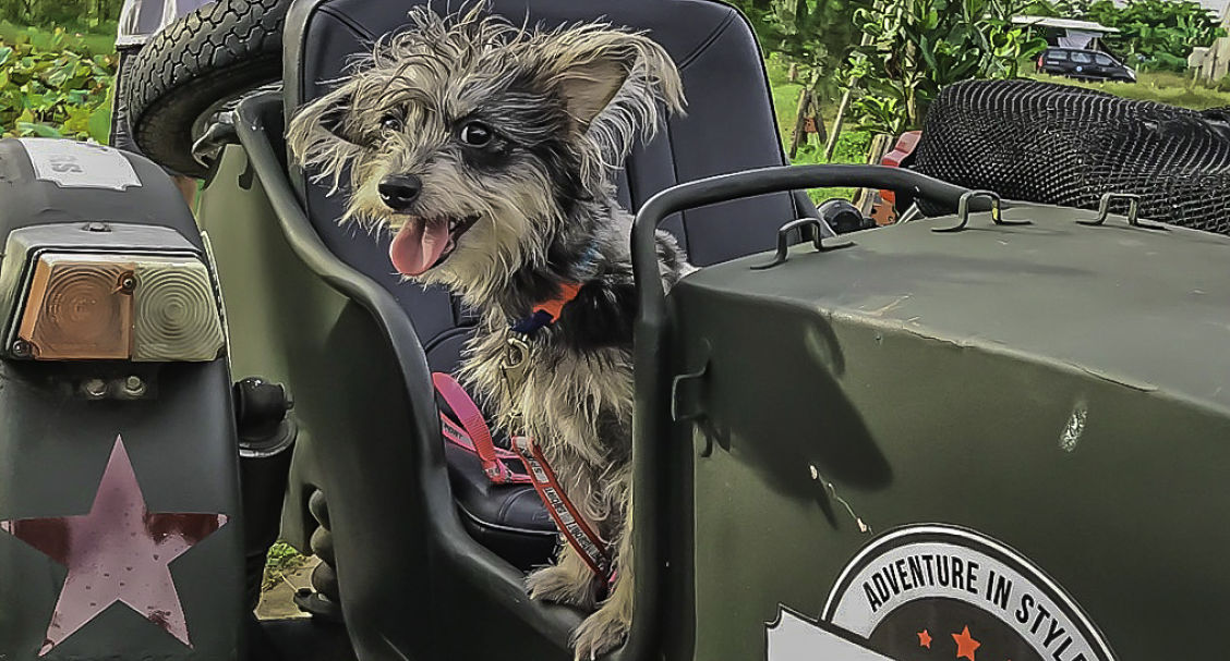 Hoi An Motorcycle Adventures. Hoi An Sidecar Tours. Muffy the dog 2