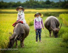 Do. Hoi An 360 Photo Tour. Hoi An Water Buffalo