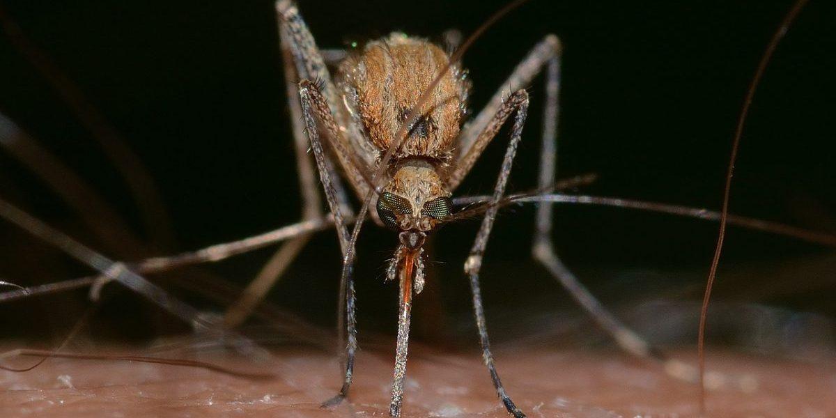 vaccinations Vietnam, mosquitoes, dengue fever in Vietnam, malaria Vietnam, malaria prevention, dengue fever prevention, dengue fever symptoms