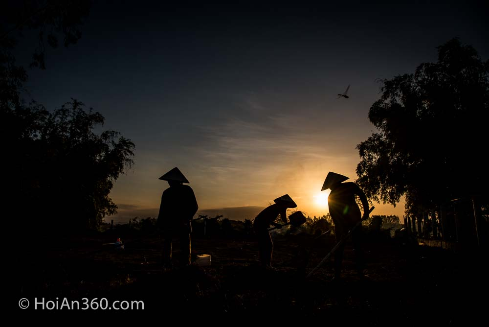 Hoi An 360 Photo Tours & Workshops. Workers at Sunset