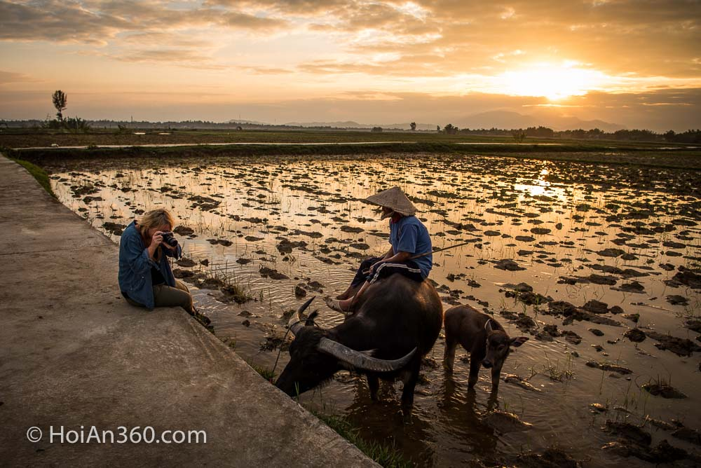 Hoi An 360 Photo Tours & Workshops. Water Buffalo at Sunset
