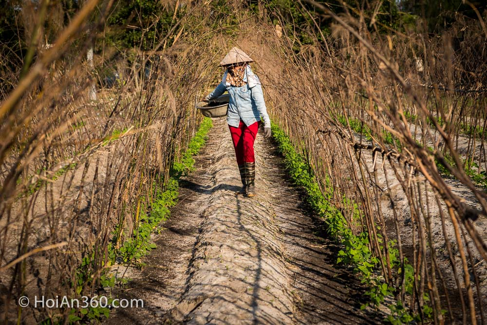 Hoi An 360 Photo Tours & Workshops. Gathering in the fields