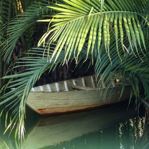 CXoconut Palms. Nipa Palms, old boat