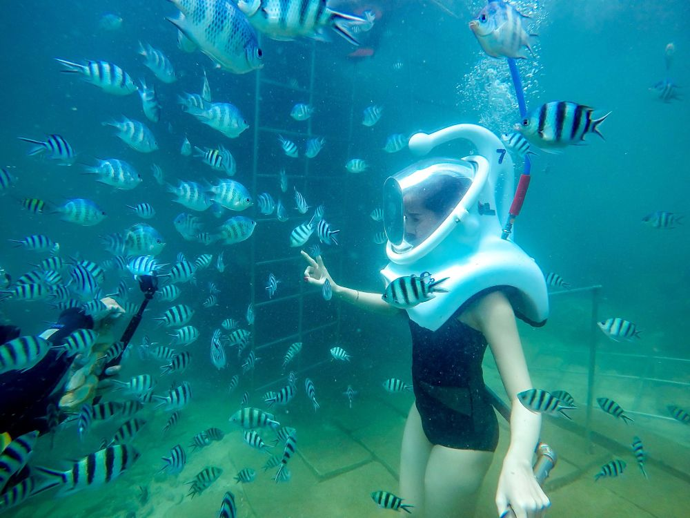 Sea Trek Vietnam REVIEW. Feeding fish_Top 10s